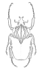 andere Käfer