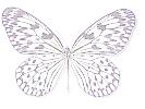 Acraeidae