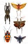 andere Insekten