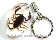 Schlüsselanhänger Skorpion