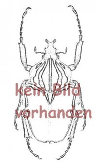 Eudicella woermanni iturina ( Zucht )  ( M 40 - 44 )  A2