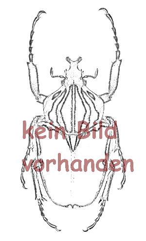 Phaedimus lydiae ( rot )